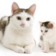 Come calcolare l'età dei gatti in anni umani