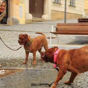 Collari per cani: a strozzo, mezzo strozzo, a cavezza e antiabbaio