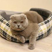 Cuccia per gatti: migliori cucce, lettini, cuscini e amache