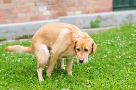 Diarrea cane: quando preoccuparsi? Sintomi e cure