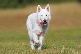 Giochi per cani: dai giocattoli per divertimento all'addestramento