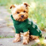 Inverno: come scegliere il giusto abbigliamento per cani